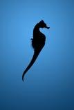 Silhouet van seahorse Stock Foto