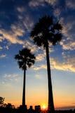 Silhouet van suikerpalm op zonsonderganghemel Stock Foto's