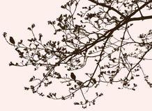 Silhouet van takken van een tot bloei komende boom in de lente vector illustratie
