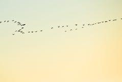Silhouet van troep van vogels Royalty-vrije Stock Foto's