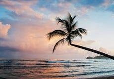 Silhouet van tropische palm Royalty-vrije Stock Foto's
