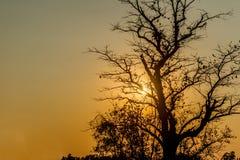 Silhouet van tropische zonsondergang met bomen, Thailand Stock Foto's
