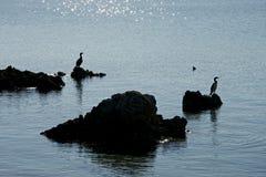 Silhouet van twee aalscholvers op de rotsen Stock Foto