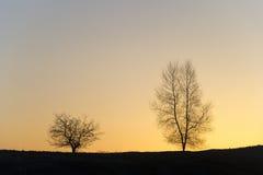 Silhouet van twee bomen. Royalty-vrije Stock Afbeeldingen