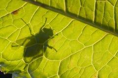 Silhouet van vlieg op het blad van het Dok Stock Foto