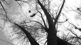 Silhouet van vliegende kraaien stock footage