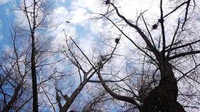 Silhouet van vliegende kraaien stock video