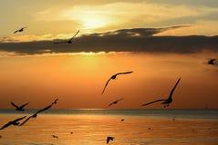 Silhouet van vliegende Zeemeeuwen op overzeese zonsondergang Stock Afbeeldingen
