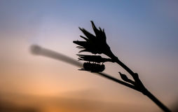 Silhouet van vlieggreep op het blad bij zonsondergang, macroschot Royalty-vrije Stock Foto