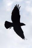 Silhouet van vogel Royalty-vrije Stock Foto's