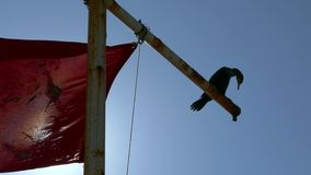 Silhouet van vogel in wind met rode vlag en zon stock footage