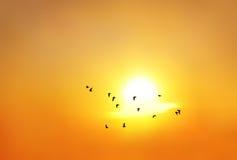 Silhouet van vogels Stock Afbeelding
