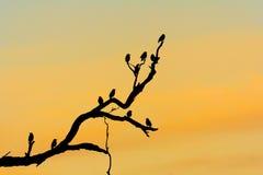 Silhouet van vogels in boom op schemer Royalty-vrije Stock Afbeeldingen
