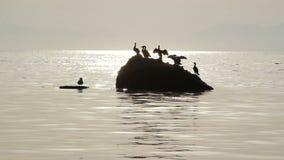 Silhouet van vogels die op de steen in het water zitten stock videobeelden