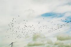 Silhouet van vogels in een hemel. Stock Afbeelding