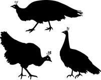 Silhouet van wijfje peafowl Stock Afbeeldingen