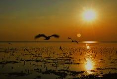 Silhouet van zeemeeuwen die bij zonsondergang vliegen Royalty-vrije Stock Afbeeldingen
