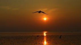 Silhouet van zeemeeuwen die bij zonsondergang vliegen Royalty-vrije Stock Foto's