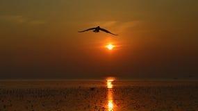 Silhouet van zeemeeuwen die bij zonsondergang vliegen Stock Afbeelding