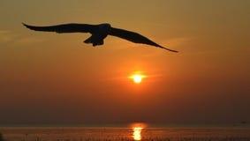 Silhouet van zeemeeuwen die bij zonsondergang vliegen Stock Afbeeldingen