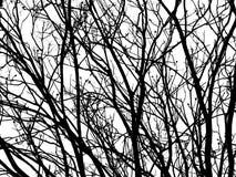 Silhouet van zwarte boomtakken stock afbeeldingen