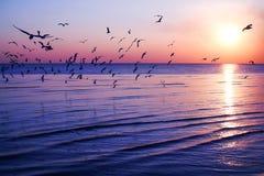 Silhouet vliegende vogel Stock Afbeeldingen