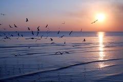 Silhouet vliegende vogels Royalty-vrije Stock Foto's
