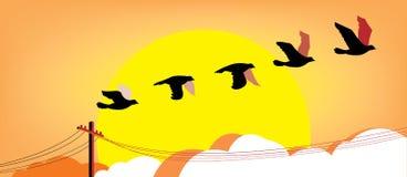 Silhouet vliegende vogels bij zonsondergang royalty-vrije illustratie
