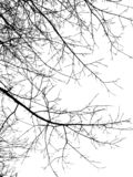 Silhouet zwarte takken royalty-vrije stock fotografie