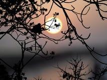 Silhouetaap op boom Royalty-vrije Stock Afbeeldingen