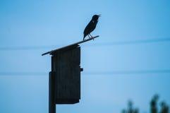 Silhouetbeeld van een Starling Stock Fotografie
