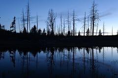 Silhouetbezinning in vijver, het Nationale Park van Yellowstone Stock Afbeeldingen