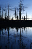 Silhouetbezinning in vijver, het Nationale Park van Yellowstone Stock Afbeelding