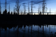 Silhouetbezinning in vijver, het Nationale Park van Yellowstone Royalty-vrije Stock Foto