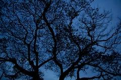 Silhouetbomen na zonsondergang Stock Foto's