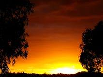silhouetbomen in zonsondergang Stock Afbeeldingen