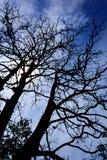 Silhouetboom Stock Afbeeldingen