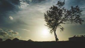 silhouetboom in de zonsondergang Stock Afbeeldingen