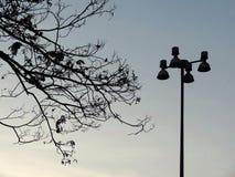 Silhouetboom en straatlantaarnpost tegen blauwe hemel Stock Fotografie