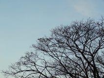 Silhouetboom en straatlantaarnpost tegen blauwe hemel Royalty-vrije Stock Fotografie