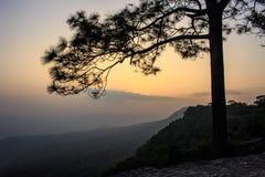 Silhouetboom met zonsondergang Stock Afbeelding
