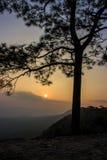 Silhouetboom met zonsondergang Stock Foto's