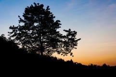 Silhouetboom in schemering stock foto