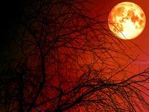 silhouete死的干燥树和血液虚度红色天空 库存图片