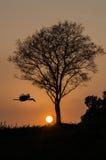 Silhouete av trädet och fågeln Arkivfoton