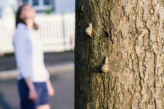 Silhouete de femme à l'arrière-plan tandis que les escargots comepting sur Photographie stock libre de droits
