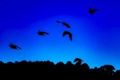 Silhouete di volata degli uccelli Fotografie Stock