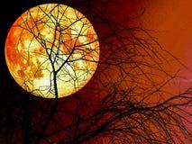 silhouete roter Himmelhintergrund des toten trockenen Baums Mondes des vollen Bluts Stockfotos
