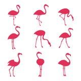 Silhouetes rosa del fenicottero isolati su fondo bianco illustrazione di stock