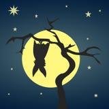 Silhouetknuppel het hangen op een droge boom Stock Fotografie